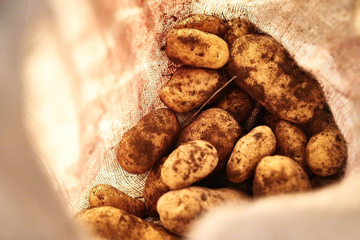 Kartoffelernte auf dem Bauernhof Glabach - stimmungsvolle Fotoreportage Bauernhof