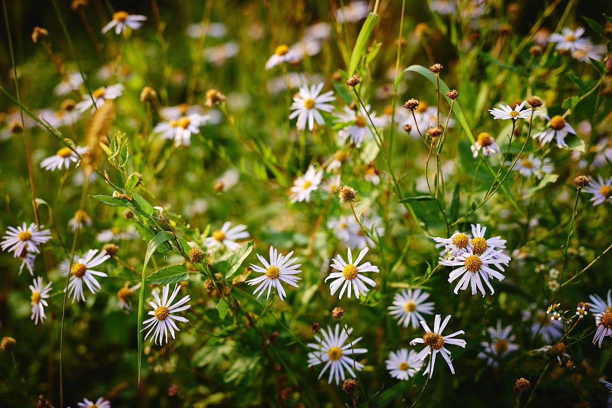 Bauernblumen auf dem Bauernhof Glabach - stimmungsvolle Fotoreportage Bauernhof