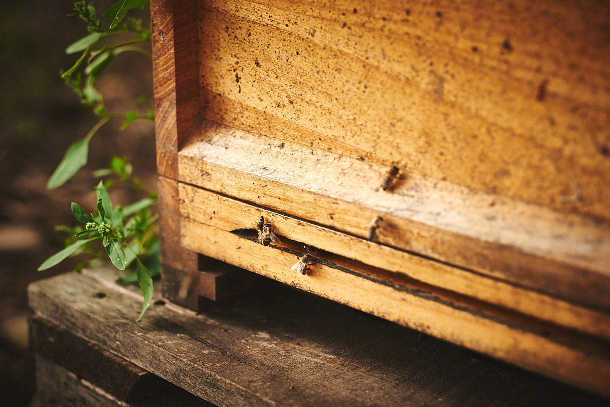 Eigene Honigproduktion auf dem Bauernhof Glabach - stimmungsvolle Fotoreportage