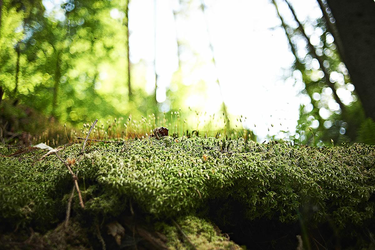 Detail Nah-Aufnahme Moos im Wald